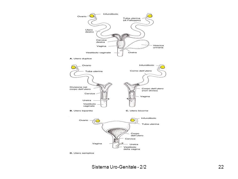 Sistema Uro-Genitale - 2/222