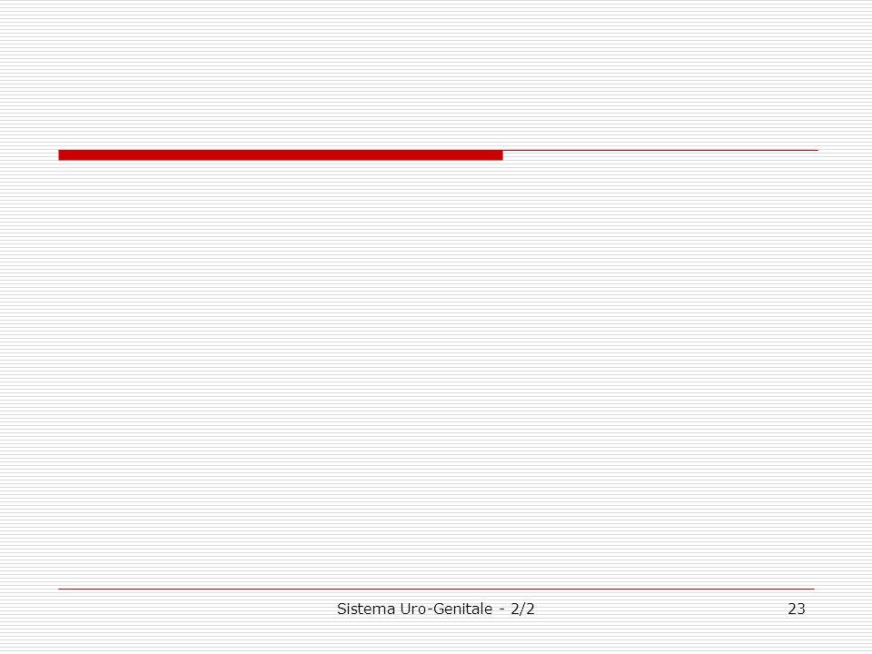 Sistema Uro-Genitale - 2/223