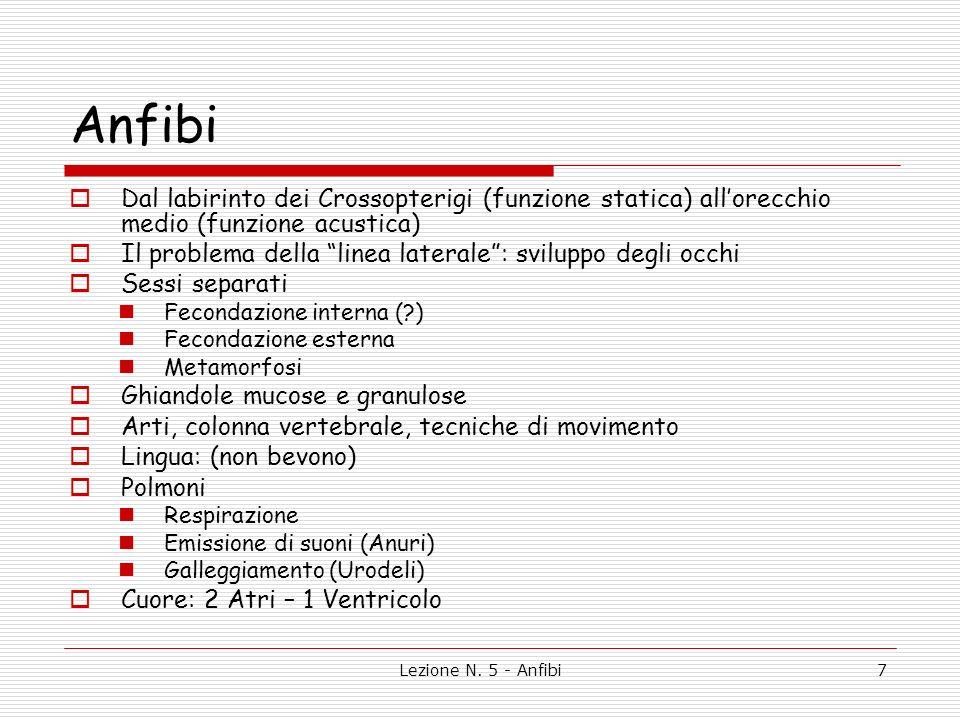 Lezione N. 5 - Anfibi7 Anfibi Dal labirinto dei Crossopterigi (funzione statica) allorecchio medio (funzione acustica) Il problema della linea lateral