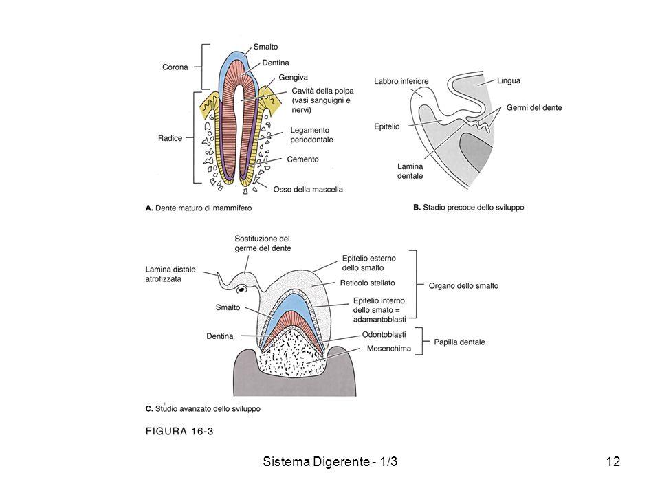 Sistema Digerente - 1/312