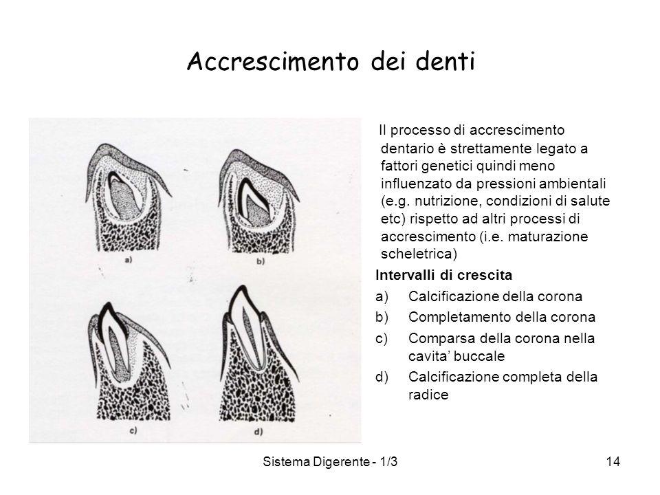 Sistema Digerente - 1/314 Accrescimento dei denti Il processo di accrescimento dentario è strettamente legato a fattori genetici quindi meno influenza