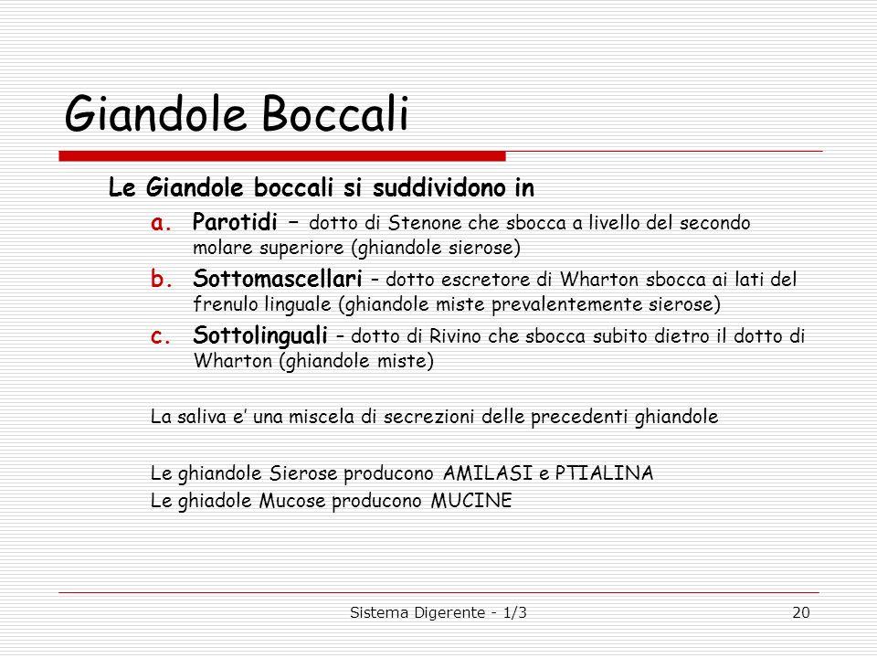 Sistema Digerente - 1/320 Giandole Boccali Le Giandole boccali si suddividono in a.Parotidi – dotto di Stenone che sbocca a livello del secondo molare