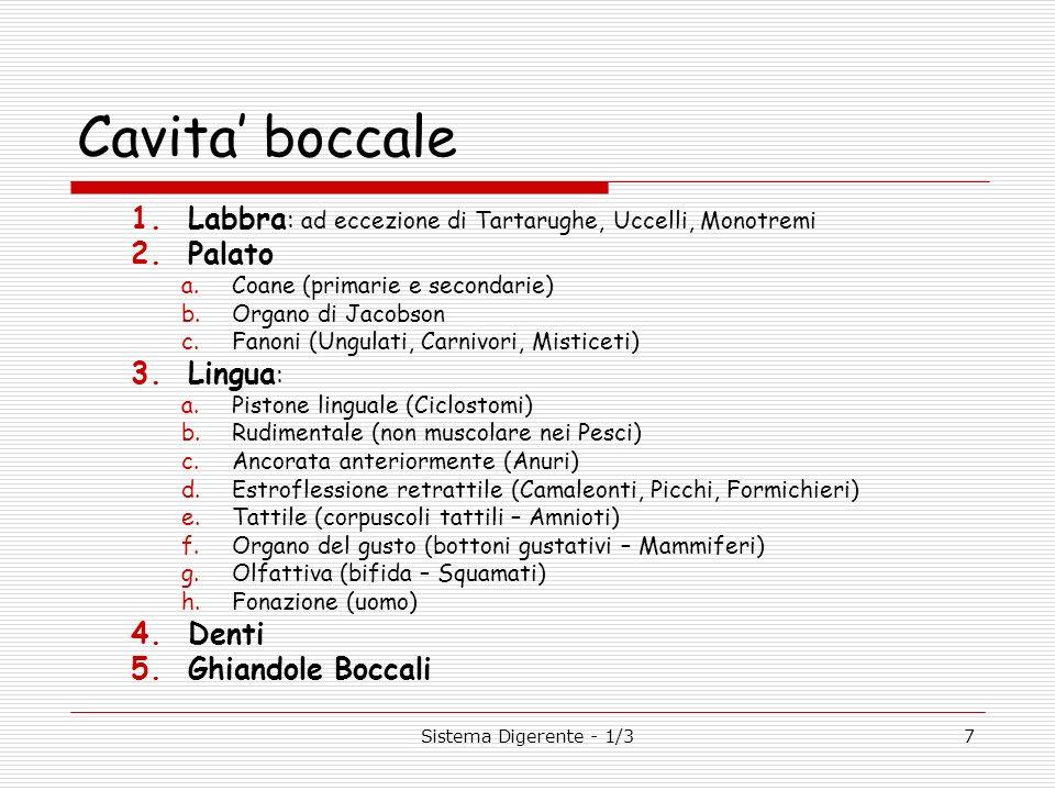 7 Cavita boccale 1.Labbra : ad eccezione di Tartarughe, Uccelli, Monotremi 2.Palato a.Coane (primarie e secondarie) b.Organo di Jacobson c.Fanoni (Ung