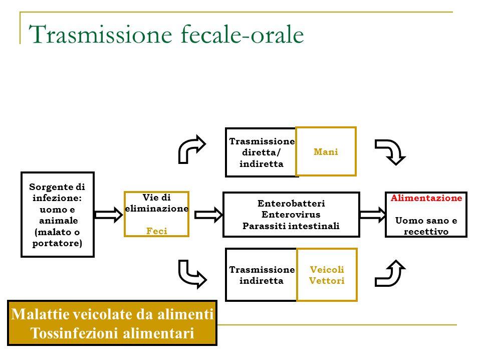 Trasmissione fecale-orale Sorgente di infezione: uomo e animale (malato o portatore) Vie di eliminazione Feci Enterobatteri Enterovirus Parassiti inte
