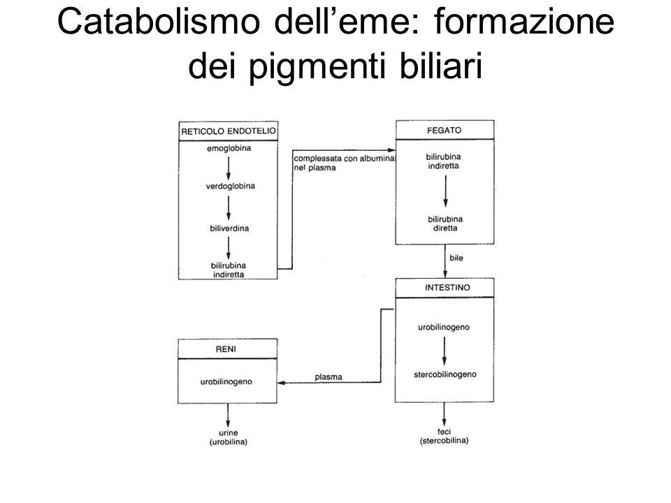 Catabolismo delleme: formazione dei pigmenti biliari