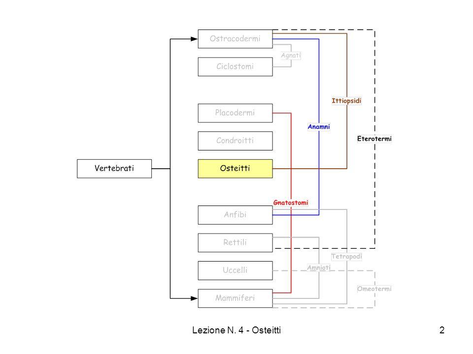 Lezione N. 4 - Osteitti13 Pesci Elettrici