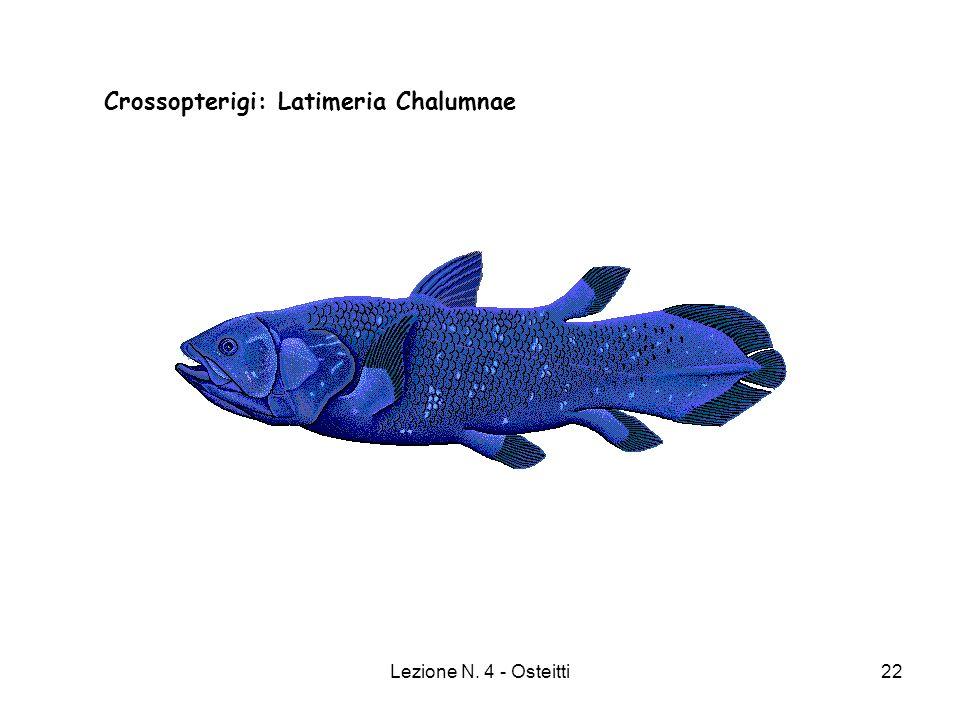 Lezione N. 4 - Osteitti22 Crossopterigi: Latimeria Chalumnae