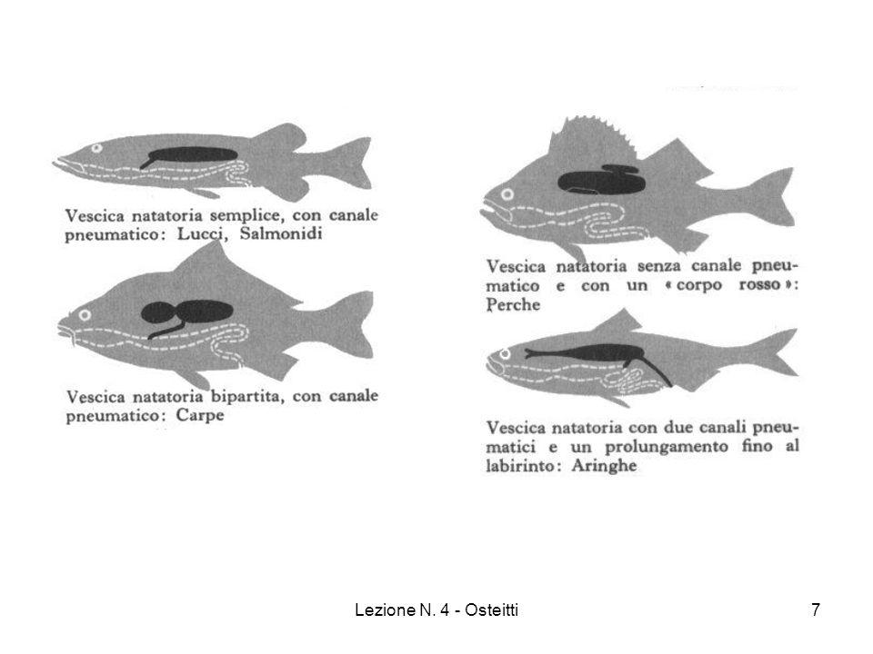 Lezione N. 4 - Osteitti28