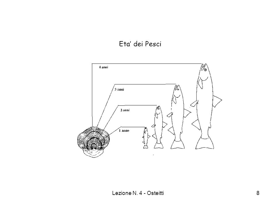 Lezione N. 4 - Osteitti29