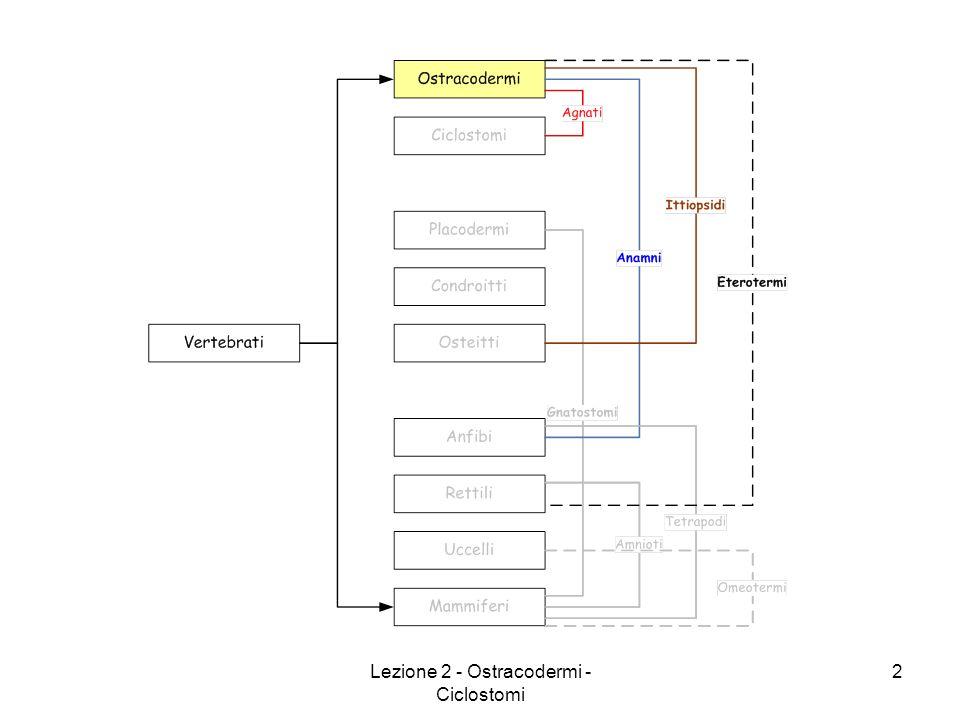 Lezione 2 - Ostracodermi - Ciclostomi 13