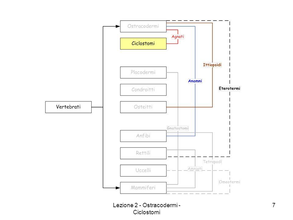 Lezione 2 - Ostracodermi - Ciclostomi 18
