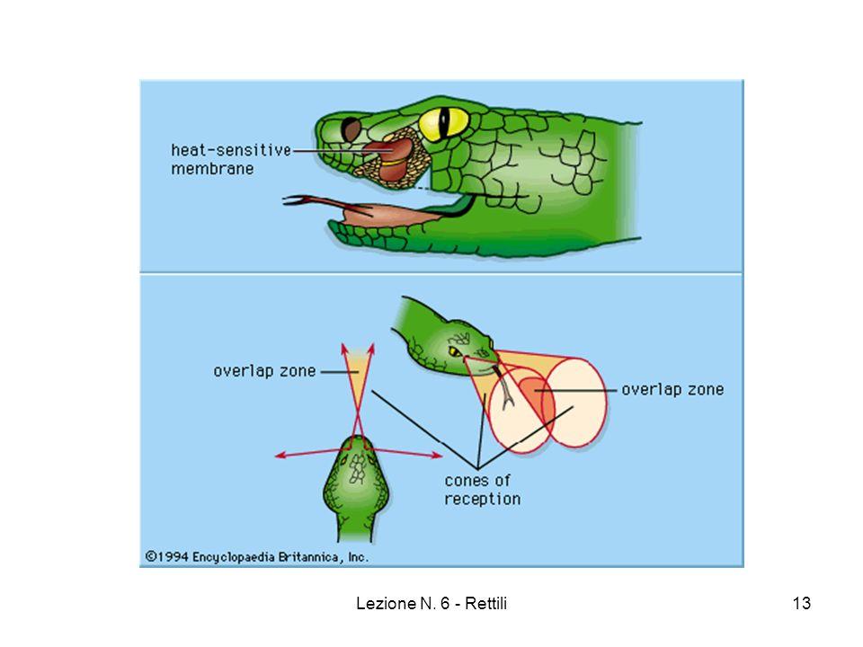 Lezione N.6 - Rettili14 Rettili Processi Rigenerativi: Autotomia (Coda) Vocalizzazioni.