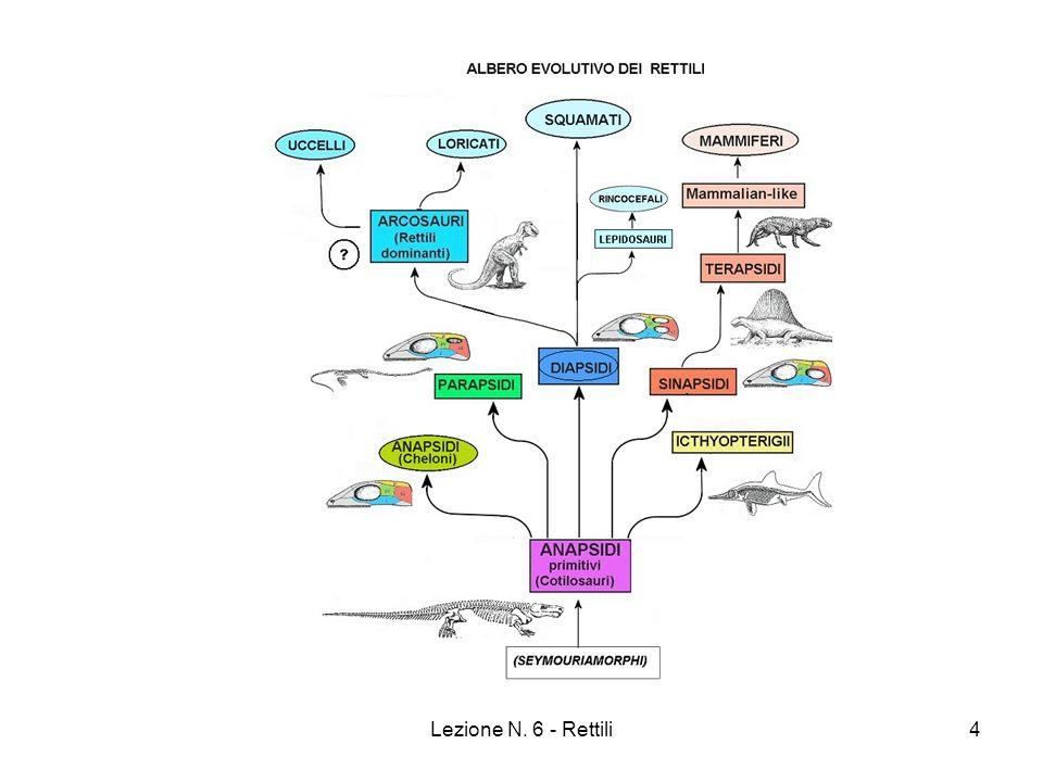 Lezione N. 6 - Rettili4