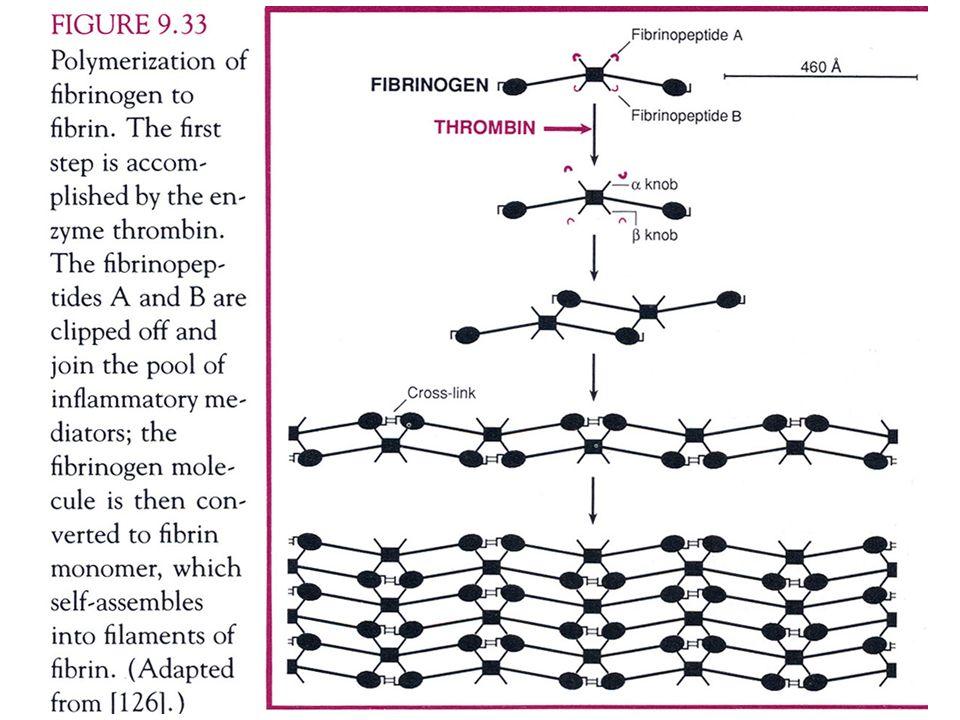 IL COMPLEMENTO Sistema proteico presente nel siero, che completa lazione delle immunoglobuline.