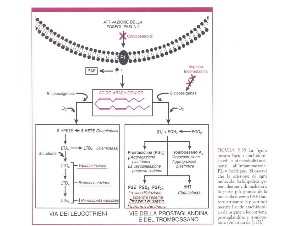 Pirogeni endogeni Mediatori del dolore