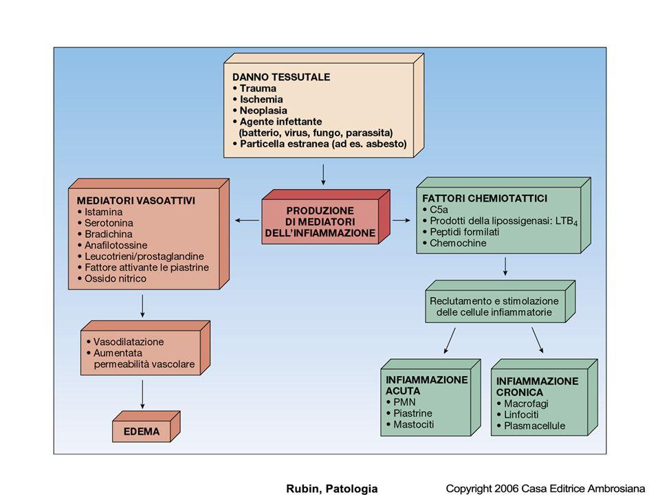 FONTI DI MEDIATORI 1.Mediatori che si generano dai sistemi polimolecolari solubili del plasma e dellinterstizio.