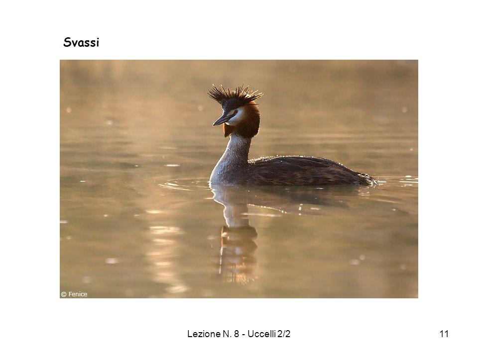 Lezione N. 8 - Uccelli 2/211 Svassi