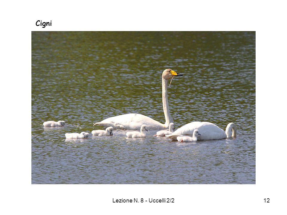 Lezione N. 8 - Uccelli 2/212 Cigni