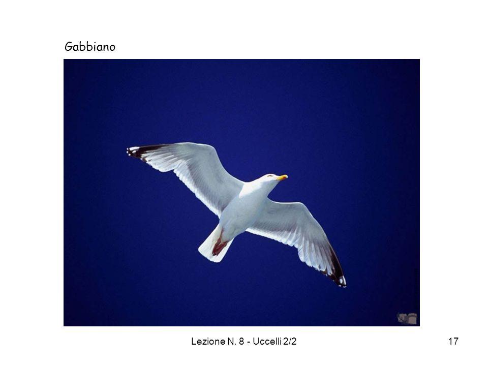 Lezione N. 8 - Uccelli 2/217 Gabbiano