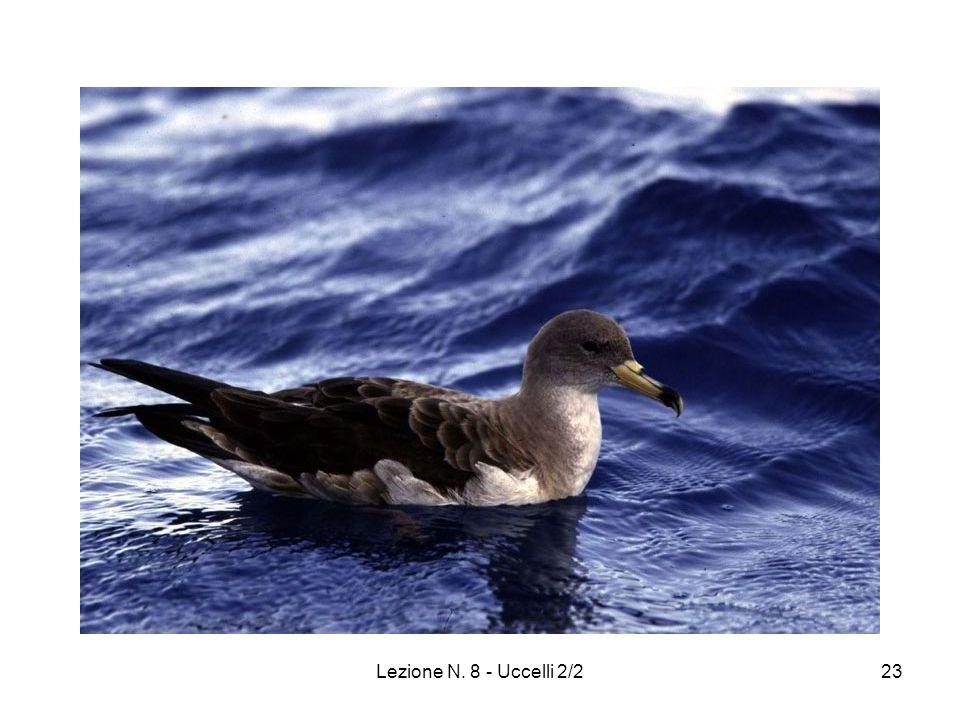 Lezione N. 8 - Uccelli 2/223