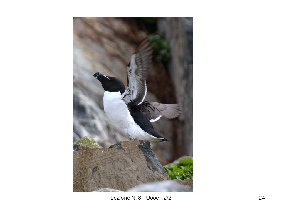 Lezione N. 8 - Uccelli 2/224