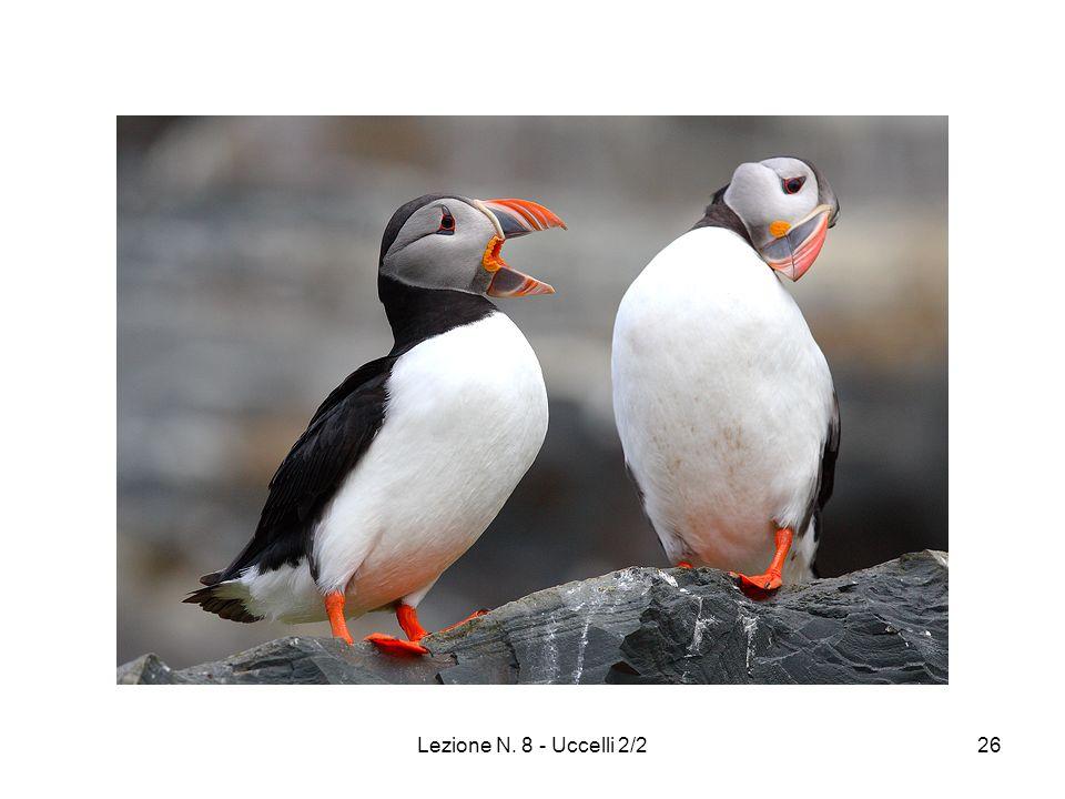 Lezione N. 8 - Uccelli 2/226