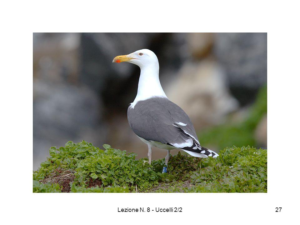 Lezione N. 8 - Uccelli 2/227