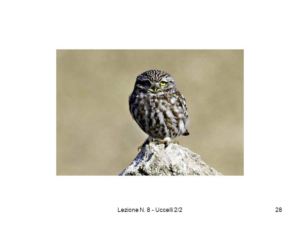 Lezione N. 8 - Uccelli 2/228
