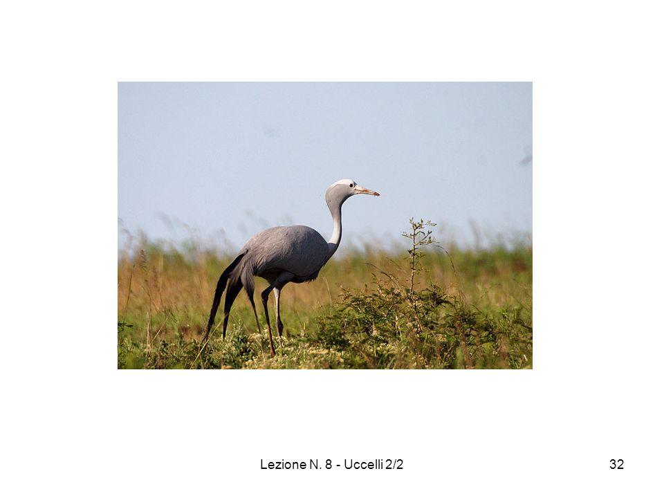 Lezione N. 8 - Uccelli 2/232