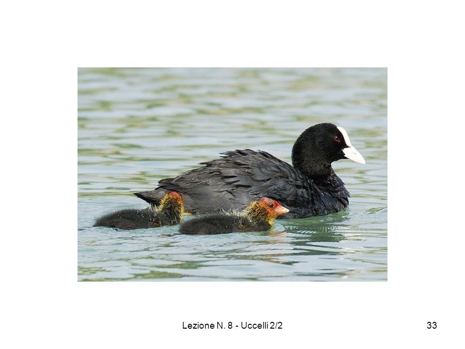 Lezione N. 8 - Uccelli 2/233