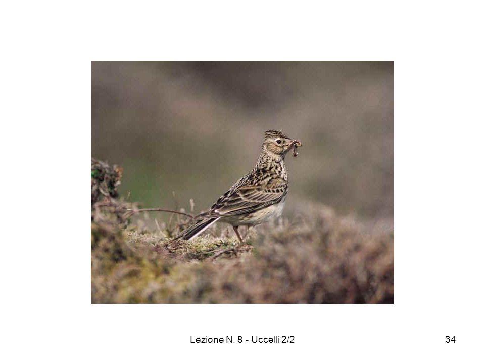 Lezione N. 8 - Uccelli 2/234