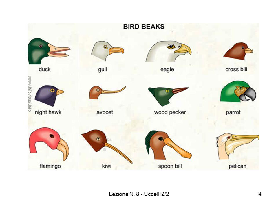 Lezione N. 8 - Uccelli 2/235