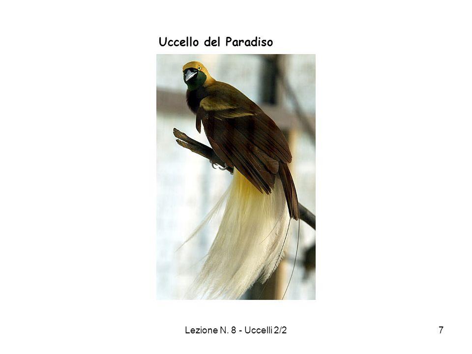 Lezione N. 8 - Uccelli 2/27 Uccello del Paradiso