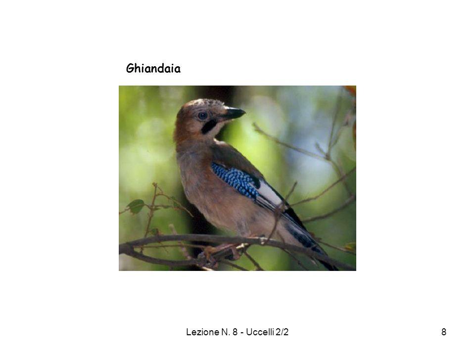 Lezione N. 8 - Uccelli 2/229