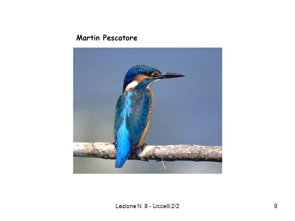 Lezione N. 8 - Uccelli 2/29 Martin Pescatore
