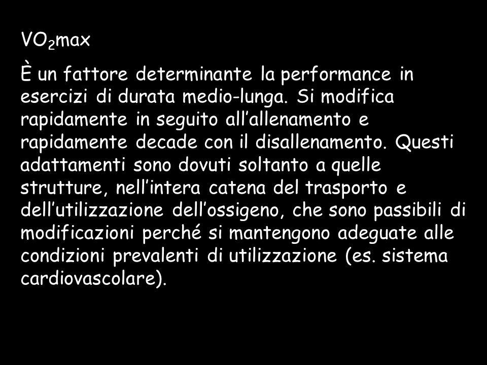 VO 2 max È un fattore determinante la performance in esercizi di durata medio-lunga. Si modifica rapidamente in seguito allallenamento e rapidamente d