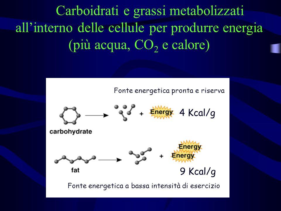 Carboidrati e grassi metabolizzati allinterno delle cellule per produrre energia (più acqua, CO 2 e calore) 4 Kcal/g 9 Kcal/g Fonte energetica pronta e riserva Fonte energetica a bassa intensità di esercizio