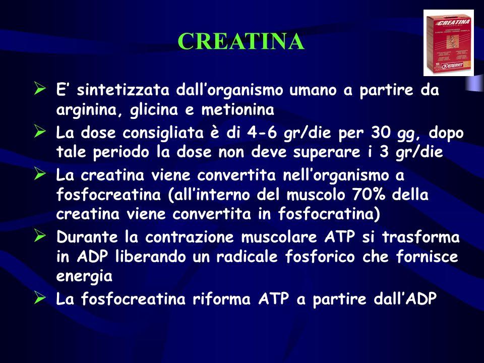 CREATINA E sintetizzata dallorganismo umano a partire da arginina, glicina e metionina La dose consigliata è di 4-6 gr/die per 30 gg, dopo tale periodo la dose non deve superare i 3 gr/die La creatina viene convertita nellorganismo a fosfocreatina (allinterno del muscolo 70% della creatina viene convertita in fosfocratina) Durante la contrazione muscolare ATP si trasforma in ADP liberando un radicale fosforico che fornisce energia La fosfocreatina riforma ATP a partire dallADP