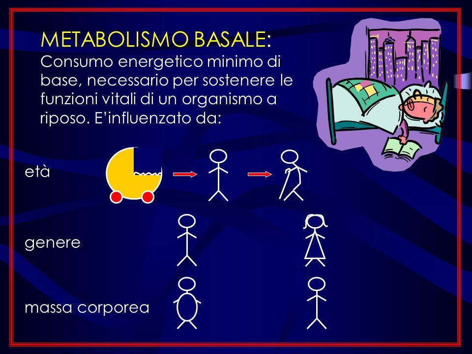 METABOLISMO BASALE: Consumo energetico minimo di base, necessario per sostenere le funzioni vitali di un organismo a riposo. Einfluenzato da: età gene