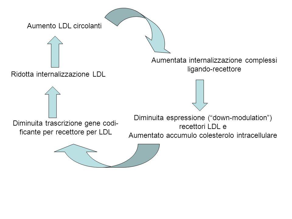 Aumento LDL circolanti Aumentata internalizzazione complessi ligando-recettore Diminuita espressione (down-modulation) recettori LDL e Aumentato accum