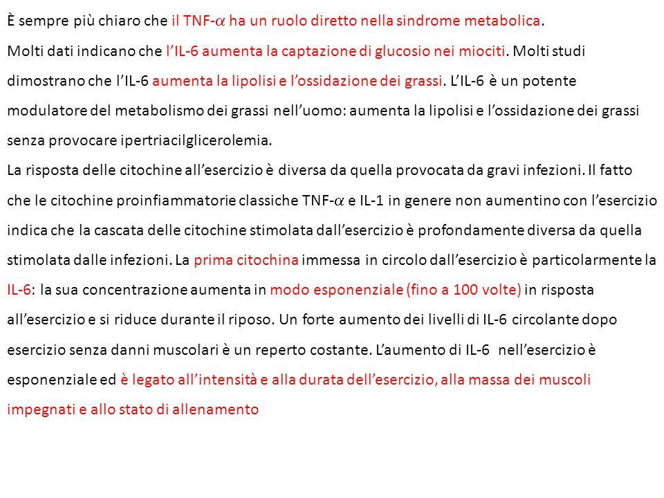 È sempre più chiaro che il TNF- ha un ruolo diretto nella sindrome metabolica. Molti dati indicano che lIL-6 aumenta la captazione di glucosio nei mio