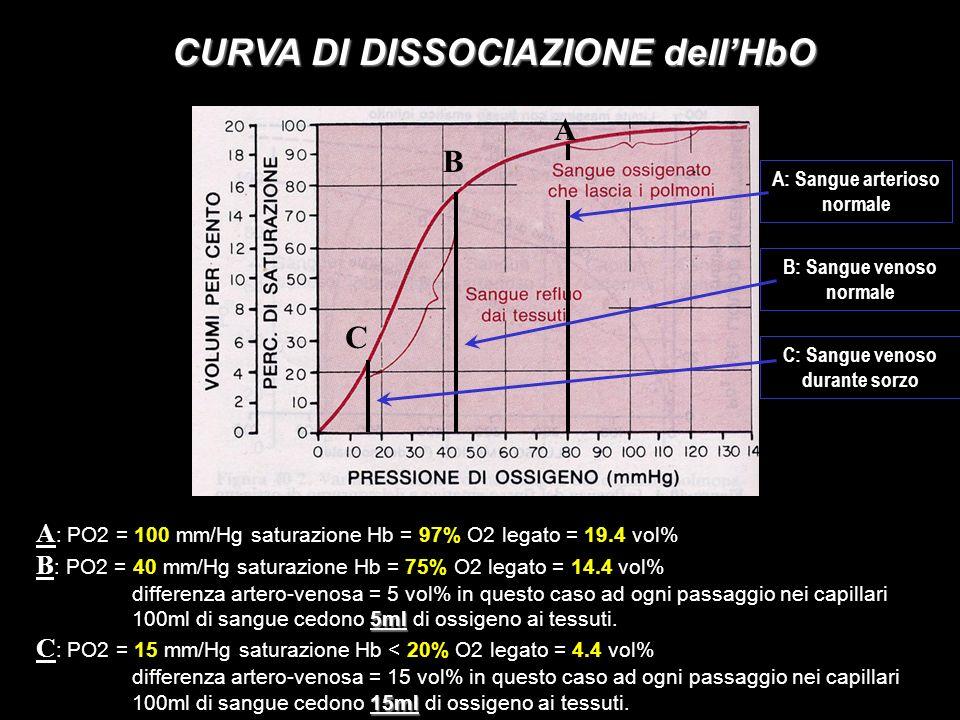CURVA DI DISSOCIAZIONE dellHbO A : PO2 = 100 mm/Hg saturazione Hb = 97% O2 legato = 19.4 vol% B : PO2 = 40 mm/Hg saturazione Hb = 75% O2 legato = 14.4