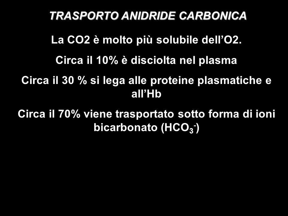 TRASPORTO ANIDRIDE CARBONICA La CO2 è molto più solubile dellO2. Circa il 10% è disciolta nel plasma Circa il 30 % si lega alle proteine plasmatiche e
