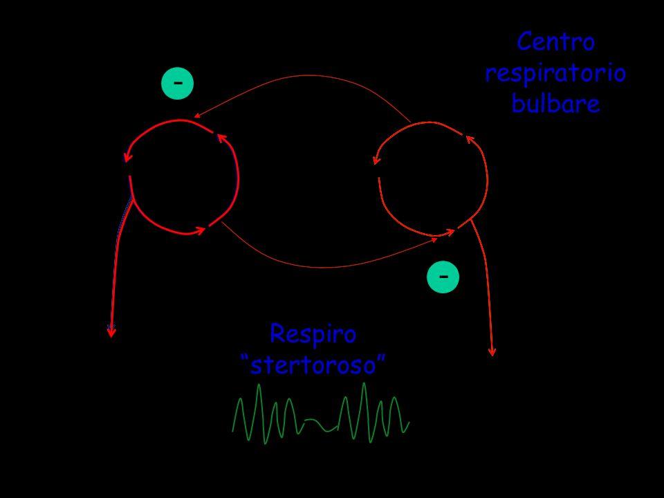 I E - - Respiro stertoroso Centro respiratorio bulbare