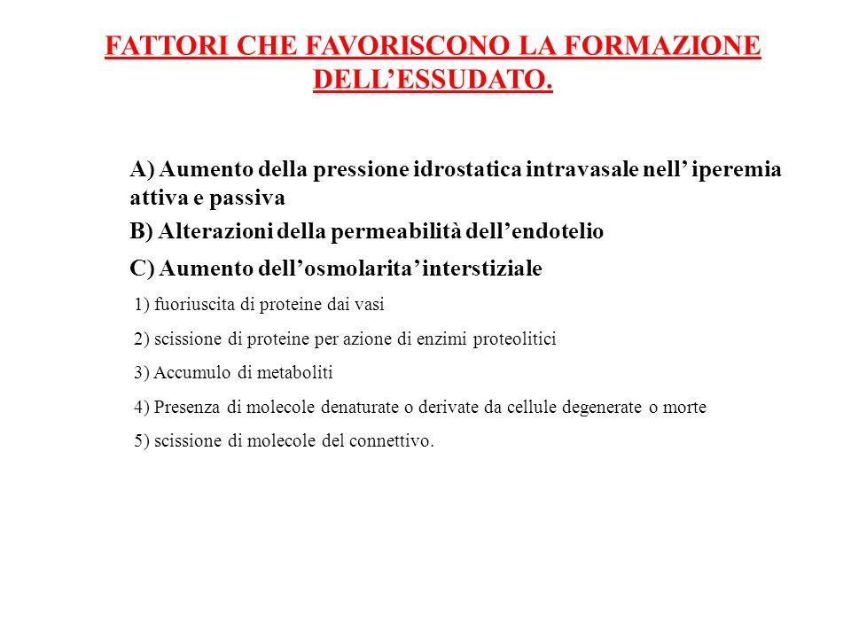 FATTORI CHE FAVORISCONO LA FORMAZIONE DELLESSUDATO. C) Aumento dellosmolarita interstiziale 1) fuoriuscita di proteine dai vasi 2) scissione di protei