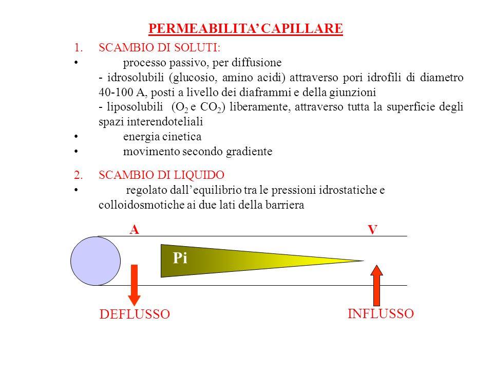 PERMEABILITA CAPILLARE 1.SCAMBIO DI SOLUTI: processo passivo, per diffusione - idrosolubili (glucosio, amino acidi) attraverso pori idrofili di diamet