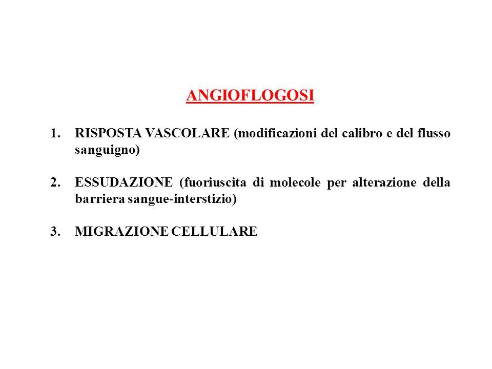 ANGIOFLOGOSI 1.RISPOSTA VASCOLARE (modificazioni del calibro e del flusso sanguigno) 2.ESSUDAZIONE (fuoriuscita di molecole per alterazione della barr