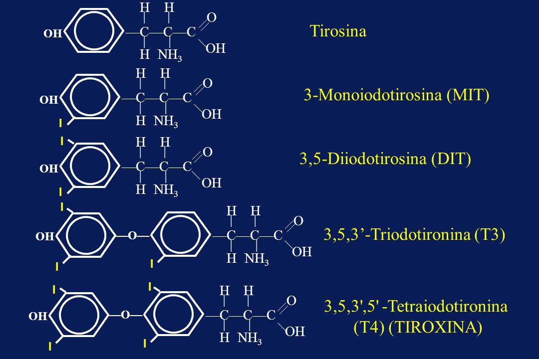 Tirosina 3-Monoiodotirosina (MIT) 3,5-Diiodotirosina (DIT) I I 3,5,3-Triodotironina (T3) 3,5,3',5' -Tetraiodotironina (T4) (TIROXINA) OH O CCC H H H N