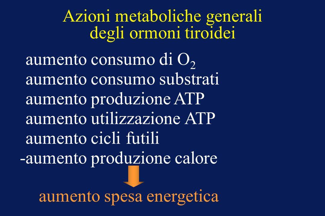Azioni metaboliche generali degli ormoni tiroidei -aumento consumo di O 2 -aumento consumo substrati -aumento produzione ATP -aumento utilizzazione AT