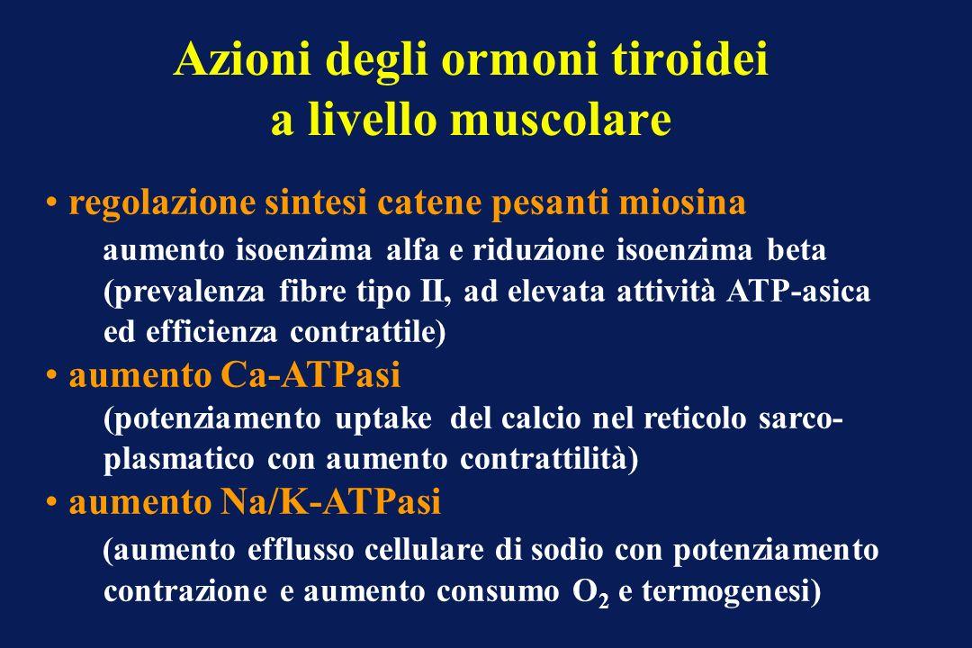 Azioni degli ormoni tiroidei a livello muscolare regolazione sintesi catene pesanti miosina aumento isoenzima alfa e riduzione isoenzima beta (prevale